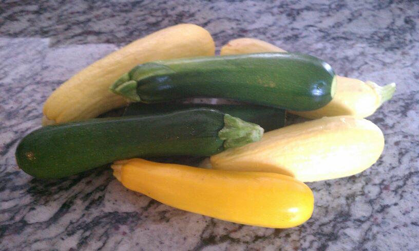 2012 Organic Garden Lots of Zuchinni