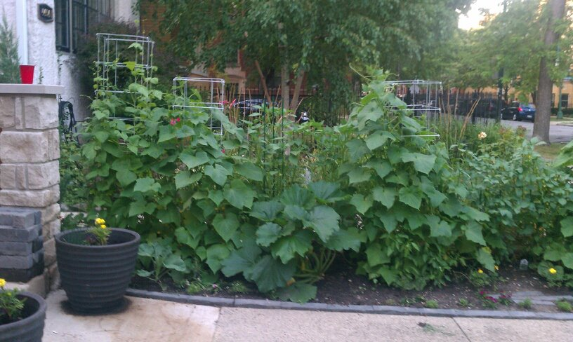 My Organic Front Yard Garden 2012