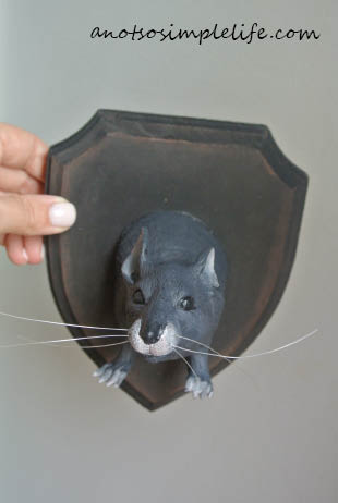Taxidermy Rat Halloween DIY Rat Finished 2