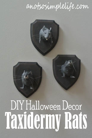 DIY Halloween Decor - Taxidermy Rat Plaques