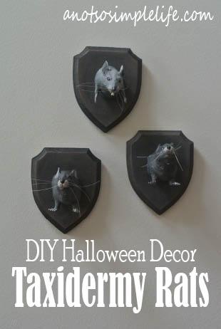 DIY Halloween Decor - Taxidermy Rat Plaques