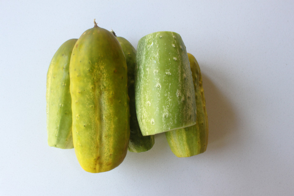 Senf Gurken (1)